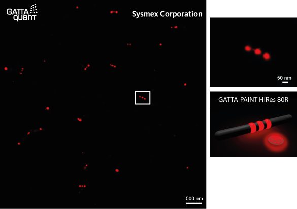 GATTA-PAINT HiRes measured on Sysmex M-1000 super-resolution microscope